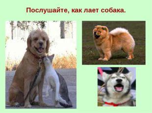 Послушайте, как лает собака.