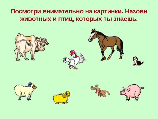 Посмотри внимательно на картинки. Назови животных и птиц, которых ты знаешь.