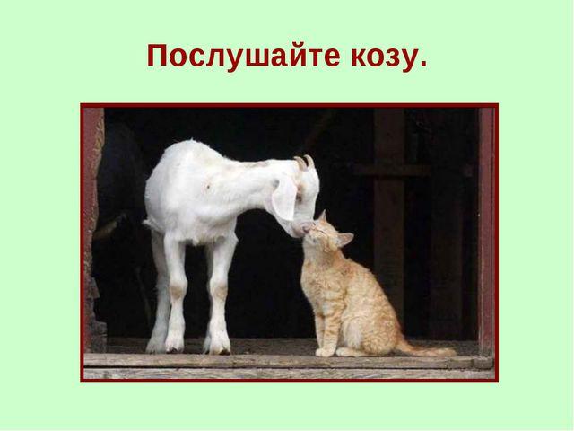 Послушайте козу.