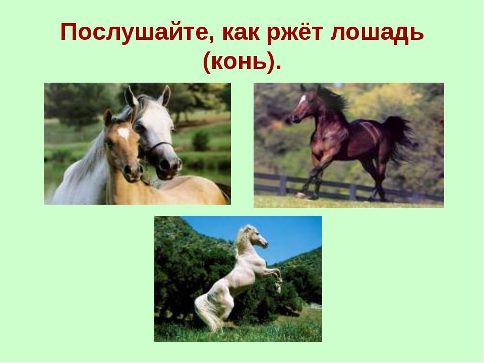 Послушайте, как ржёт лошадь (конь).