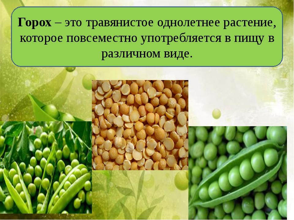 Горох–этотравянистое однолетнее растение, котороеповсеместно употребляетс...