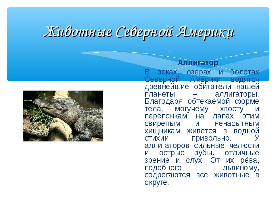 Животные Северной Америки Аллигатор В реках, озёрах и болотах Северной Амери...