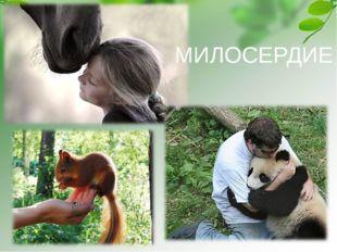 МИЛОСЕРДИЕ Белка - http://nature.baikal.ru/phs/norm/43/43428.jpg Панда - http