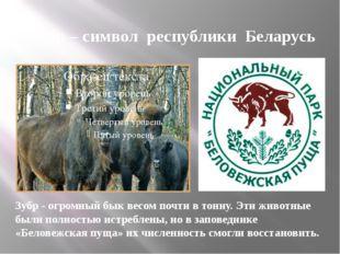 Зубр – символ республики Беларусь Зубр - огромный бык весом почти в тонну. Эт