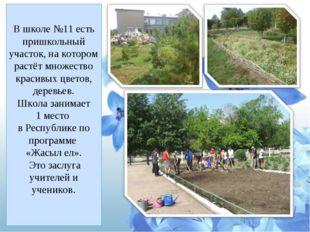 В школе №11 есть пришкольный участок, на котором растёт множество красивых цв