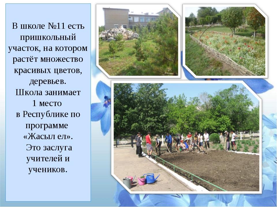 В школе №11 есть пришкольный участок, на котором растёт множество красивых цв...