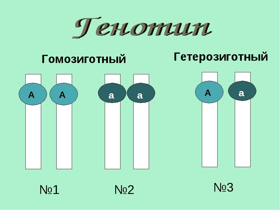 Гомозиготный Гетерозиготный №1 №2 №3