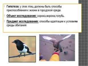 Гипотеза: у этих птиц должны быть способы приспособления к жизни в городской