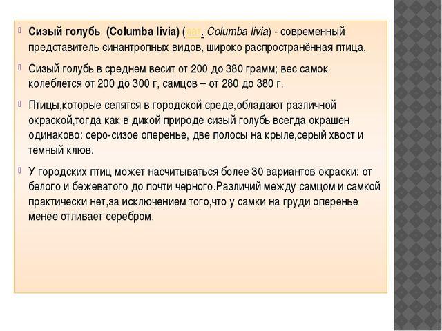 Сизый голубь (Columba livia) (лат.Columba livia) - современный представитель...