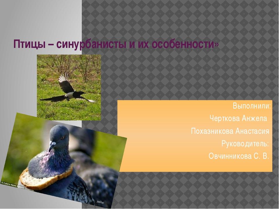 Птицы – синурбанисты и их особенности»  Выполнили: Черткова Анжела Похазнико...