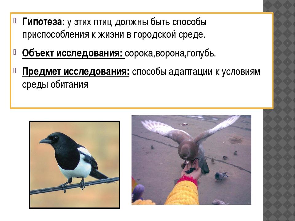 Гипотеза: у этих птиц должны быть способы приспособления к жизни в городской...