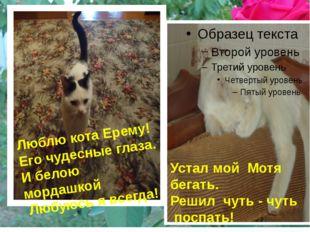 Люблю кота Ерему! Его чудесные глаза. И белою мордашкой Любуюсь я всегда! Ус