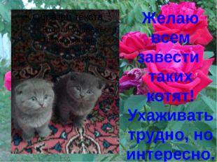 Желаю всем завести таких котят! Ухаживать трудно, но интересно.