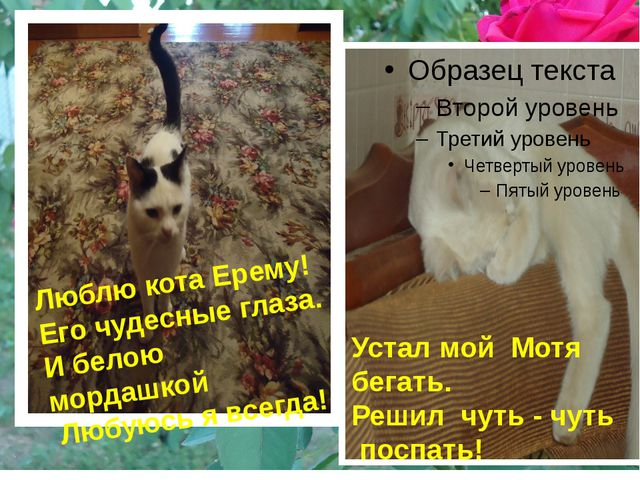 Люблю кота Ерему! Его чудесные глаза. И белою мордашкой Любуюсь я всегда! Ус...
