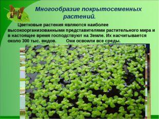 Многообразие покрытосеменных растений. Цветковые растения являются наиболе