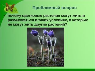 Проблемный вопрос почему цветковые растения могут жить и размножаться в таки