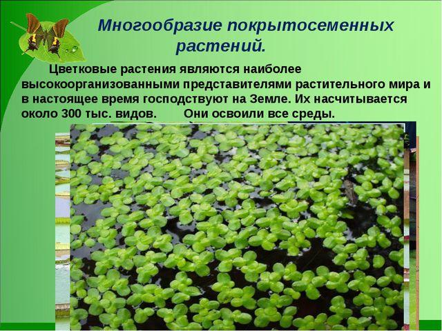 Многообразие покрытосеменных растений. Цветковые растения являются наиболе...