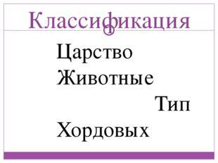 Классификация Царство Животные Тип Хордовых