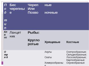 Классификация Царства Животных Типа Хордовых Под тип Бес черепные Череп Или П