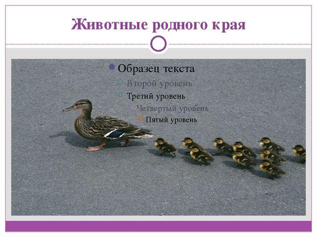 Животные родного края