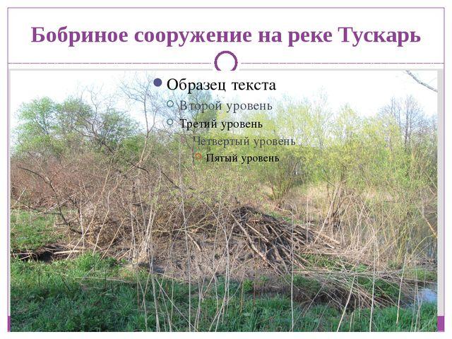 Бобриное сооружение на реке Тускарь