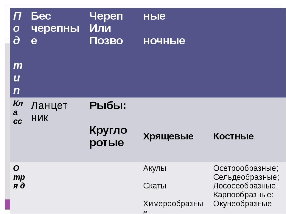 Классификация Царства Животных Типа Хордовых Под тип Бес черепные Череп Или П...