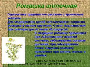 Ромашка аптечная Однолетнее травянистое растение с ароматным запахом. Для мед