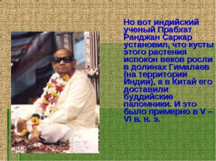 Но вот индийский ученый Прабхат Ранджан Саркар установил, что кусты этого ра