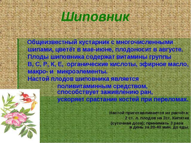 Шиповник Общеизвестный кустарник с многочисленными шипами, цветёт в мае-июне,...