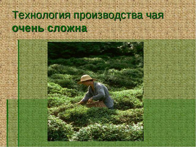 Технология производства чая очень сложна