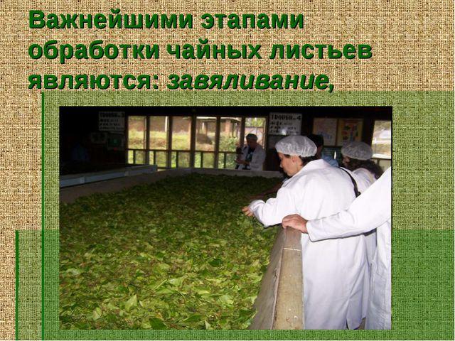 Важнейшими этапами обработки чайных листьев являются: завяливание,