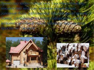 древесина кедра сибирского способна снимать множество недугов: нервное напряж