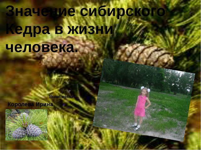Значение сибирского Кедра в жизни человека. Выполнила : Королева Ирина