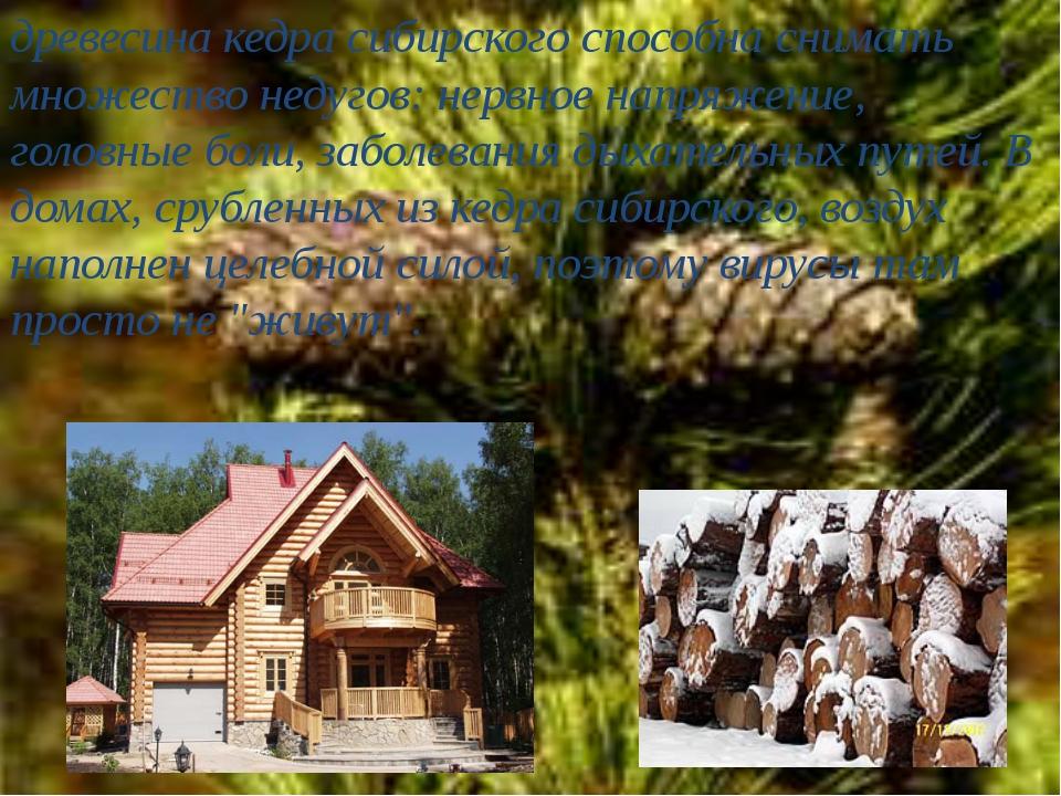 древесина кедра сибирского способна снимать множество недугов: нервное напряж...