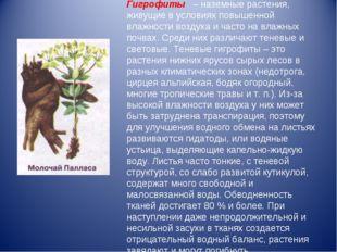 Гигрофиты– наземные растения, живущие в условиях повышенной влажности возд