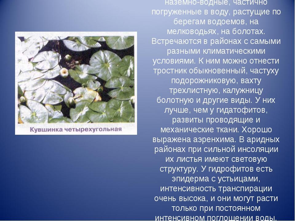 Гидрофиты– это растения наземно‑водные, частично погруженные в воду, расту...