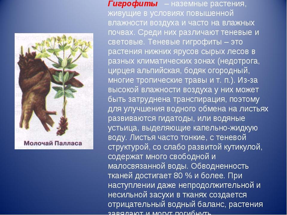 Гигрофиты– наземные растения, живущие в условиях повышенной влажности возд...