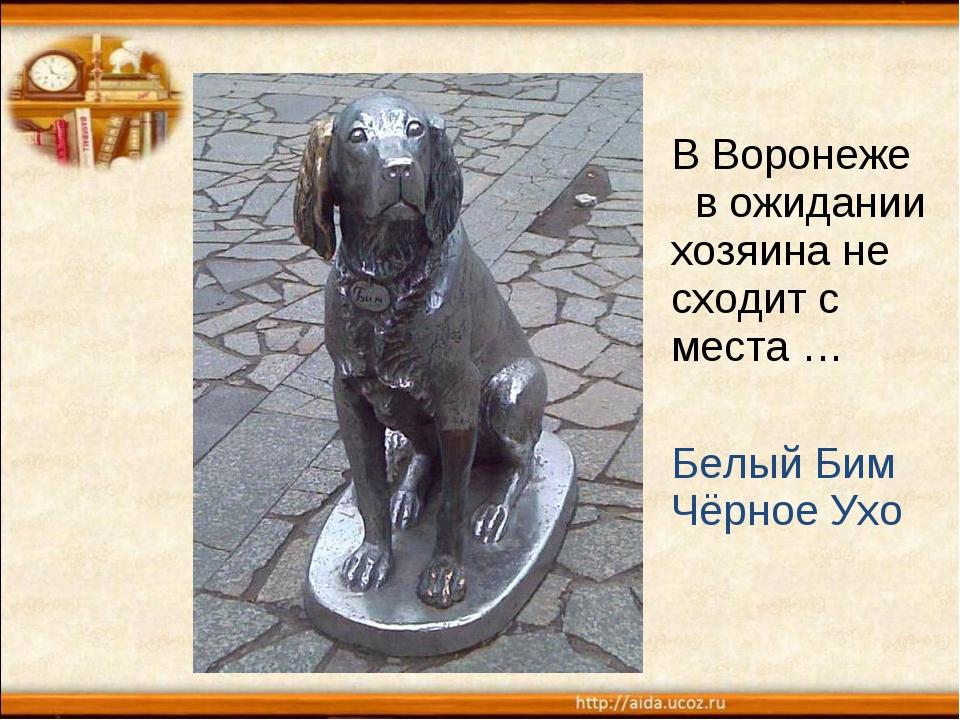 В Воронеже в ожидании хозяина не сходит с места … Белый Бим Чёрное Ухо