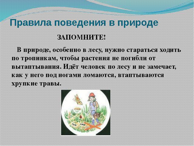 Правила поведения в природе ЗАПОМНИТЕ! В природе, особенно в лесу, нужно стар...