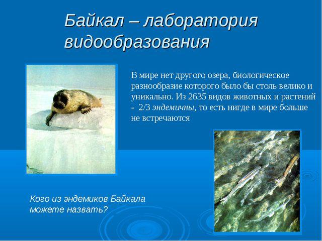 Байкал – лаборатория видообразования В мире нет другого озера, биологическое...