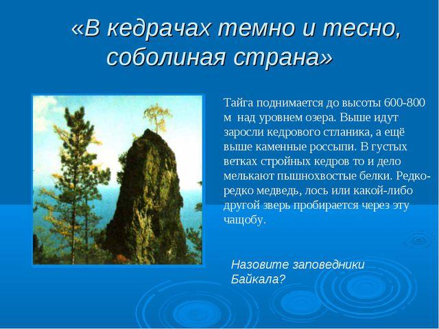 «В кедрачах темно и тесно, соболиная страна» Тайга поднимается до высоты 600...