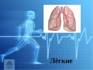 Выполняет функцию впитывания питательных веществ Кишечник
