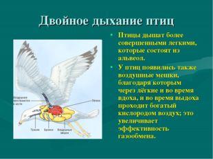 Двойное дыхание птиц Птицы дышат более совершенными легкими, которые состоят