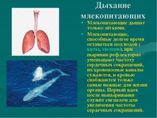 Дыхание млекопитающих Млекопитающие дышат только лёгкими. Млекопитающие, спос
