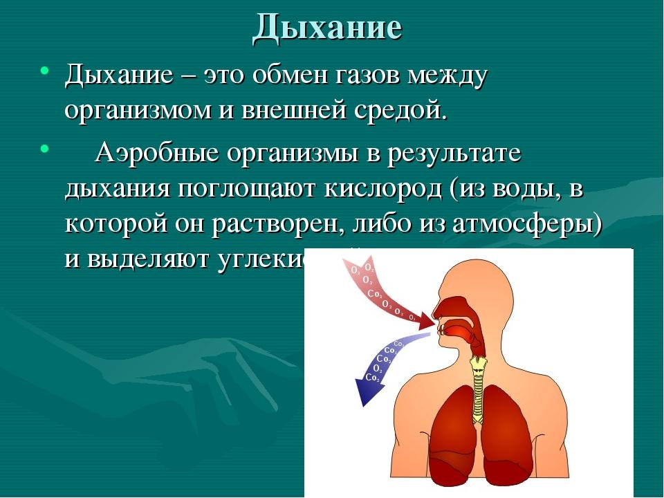 Дыхание Дыхание – это обмен газов между организмом и внешней средой. Аэробные...
