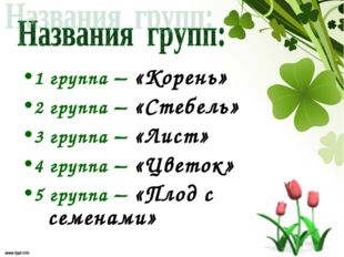 1 группа – «Корень» 2 группа – «Стебель» 3 группа – «Лист» 4 группа – «Цветок