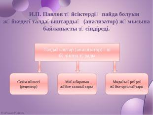 И.П. Павлов түйсіктердің пайда болуын жүйкедегі талдағыштардың (анализатор) ж