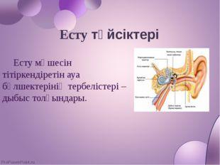 Есту түйсіктері Есту мүшесін тітіркендіретін ауа бөлшектерінің тербелістері