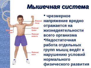 Мышечная система чрезмерное напряжение вредно отражается на жизнедеятельности