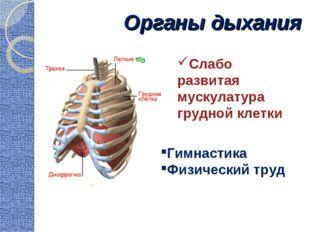 Органы дыхания Гимнастика Физический труд Слабо развитая мускулатура грудной